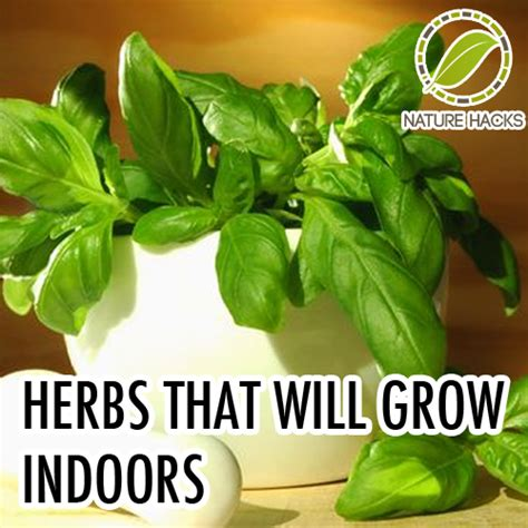 Growing Herbs Inside by Herbs That Will Grow Well Indoors