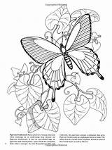 Coloring Butterfly Butterflies Nature Amazon Pages Adult Dover sketch template