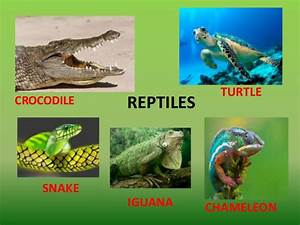 Classifying vertebrates (amphibians and reptiles)