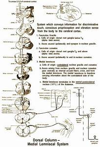 63 Best Images About Neuro Caq On Pinterest