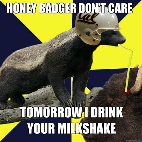 Badger Memes - honey badger don t care tomorrow i drink your milkshake honeybadgerbrains quickmeme