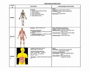 15  Free Body Diagram Templates  U2013 Sample  Example  Format