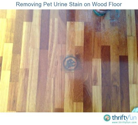 Cleaning Pet Stains From Wood Floors by Removing Pet Urine Stain On Wood Floor Thriftyfun