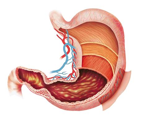 Digestion Excretion Strange Facts And Health Problems