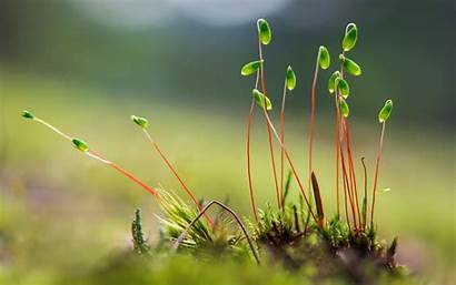 Plant Plants Growing Wallpapers Background Backgrounds Nature
