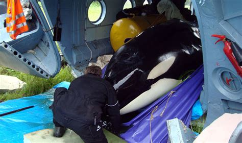 Aquarium Has Been Hiding Two Captured Orcas In Temporary