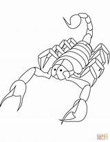 Coloring Scorpion Scorpions Printable Drawing 2009 Categories Supercoloring sketch template