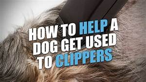 How To Help A Dog Get Used To Pet Clippers  Step