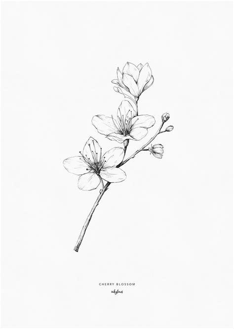 Cherry blossom   Blossom tattoo, Cherry blossom drawing