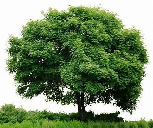 Alone Green tree #tree