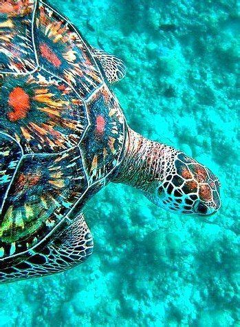 colors of the turtles colors http menentk post
