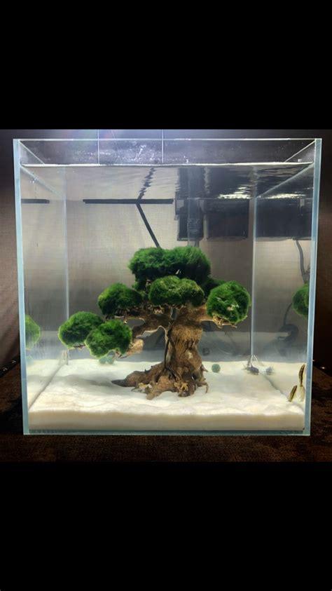 Aquascape Fish Tank by Aquascape Tree With Loss Balls Aquariums Aquarium