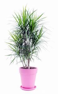 Zimmerpflanzen Für Wenig Licht : 11 zimmerpflanzen f r dunkle ecken zimmerpflanzen ~ A.2002-acura-tl-radio.info Haus und Dekorationen