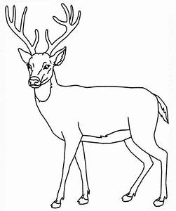 White Tailed Deer Coloring Pages To Print Coloring Home