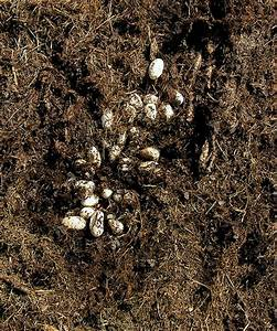 Black Snake Eggs in Compost Pile Nest | Flickr - Photo ...