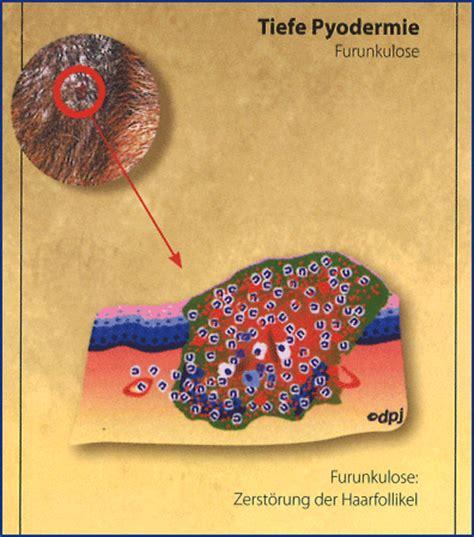 virbac deutschland pyodermie