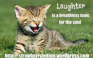 quotes me laughter Cute-Kitten-kittens-laugh happy ...