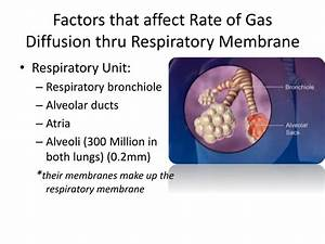 Ppt - Pulmonary Gas Exchange And Gas Transport Powerpoint Presentation