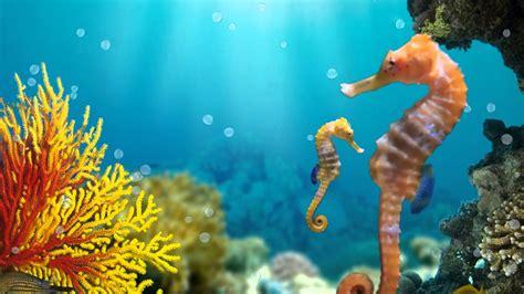 Animated Sea Wallpaper - seahorse wallpaper 183