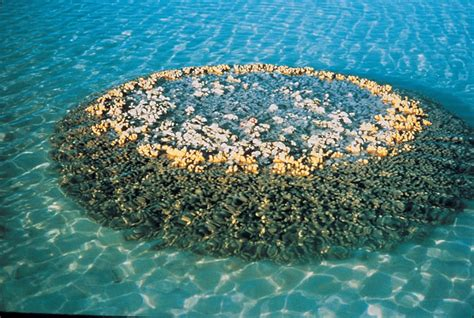 great barrier reef worlds largest coral system