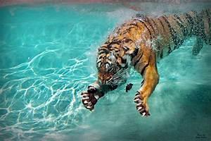 Tiger Claws | Six Flags, Vallejo. CA | kristi_Nikon_D1X ...