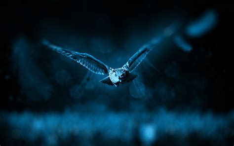 Night Owl Wallpapers