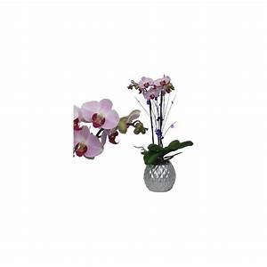 Cache Pot Orchidée : orchid e phalaenopsis rose en fleurs 2 hampes florales cache pot boule argent plantes et ~ Teatrodelosmanantiales.com Idées de Décoration