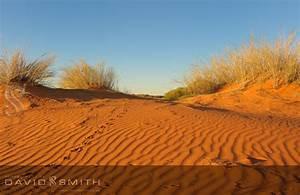 Photography by David Smith Kalahari - Photography by