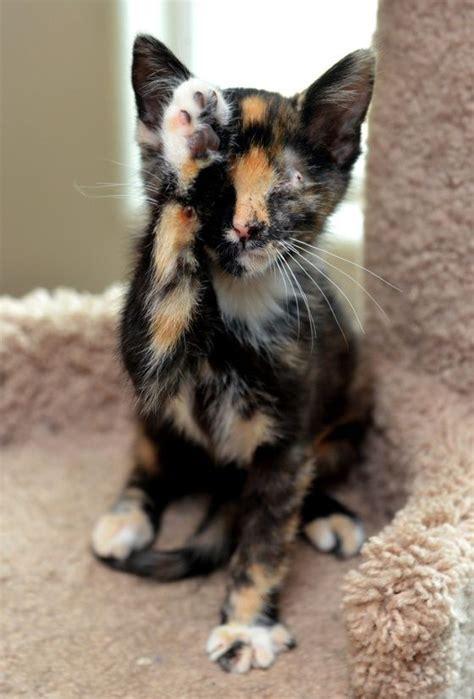 glueckskatze katzen tiere hundebabys