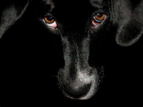 unique animals blogs black dog wallpapers  desktop