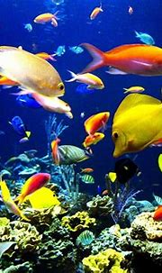 Collection : Top 28 fish wale wallpaper (HD Download)