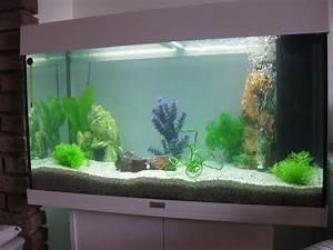 Idee Decoration Aquarium : photo d coration d 39 aquarium a vendre ~ Melissatoandfro.com Idées de Décoration
