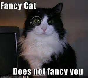 fancy cats fancy cats superlativity
