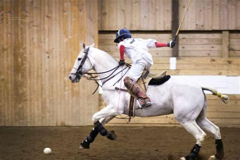 polo ponies pony thoroughbred lapolo argentine nonpareil horse breed manipuri