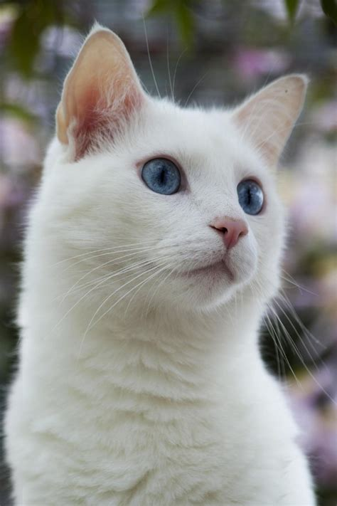 White Cat Iphone 4 Wallpaper (640x960