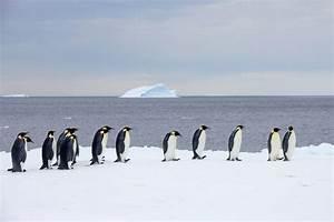 Pingouin Sur La Banquise : l 39 acthumour re creatif ctoutpourvous ~ Melissatoandfro.com Idées de Décoration
