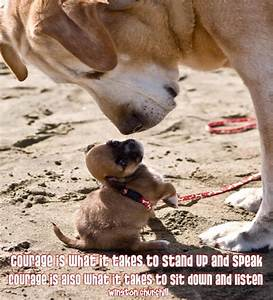 puppy/quotes - Google Search | Animal quotes | Pinterest ...