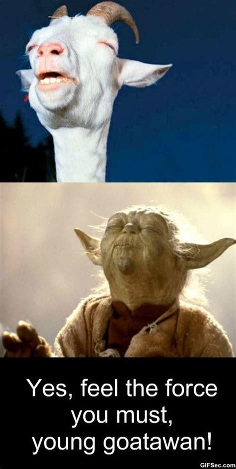 Meme Funny Pictures - meme meditation level goatawan jpg