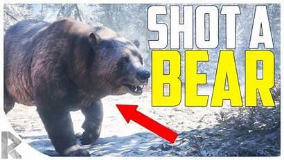 Call Wild Bear Shot Thehunter Medved Taiga