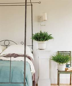 la plante verte d39interieur archzinefr With plante verte chambre a coucher
