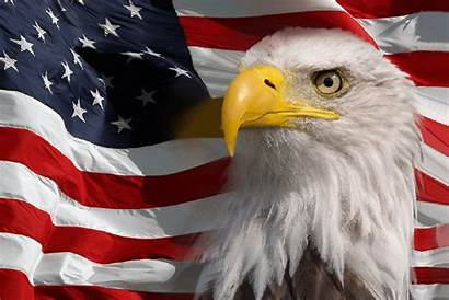 Eagle American Flag Bald Patriotic Gifs Animated