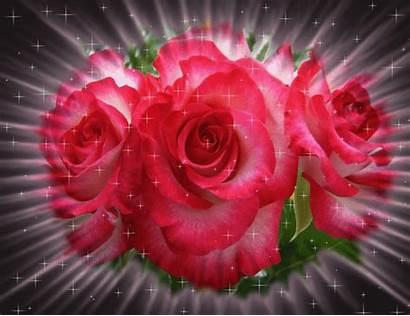 Rosas Gifs