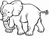 Coloring Elephant Elephants Printable Cartoon Template Preschool Animals sketch template
