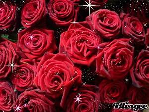 1 Rote Rose Bedeutung : rote rosen liebe bild 109892581 ~ Whattoseeinmadrid.com Haus und Dekorationen