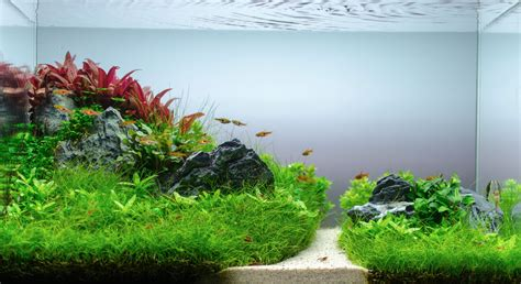Aquascaping Aquarium by The World Of Aquascaping It S Positive Impact Thrive