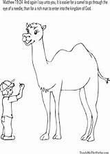 Coloring Sheets Camel Bible Needle Sheet Sunday Thomas Spanish Colors Doubting Camels Journaling Moose Preschool Worksheet sketch template