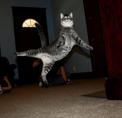 jumping cats  play   ninjas