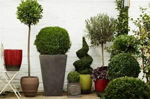 Blumentöpfe Groß Draußen : 35 gr npflanzen bilder bl hende zimmerpflanzen ~ Eleganceandgraceweddings.com Haus und Dekorationen
