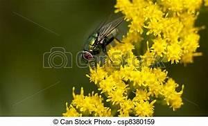 Kleine Fliegen In Blumen : stock fotografien von gr n fliegen gelber blumen gr n ~ Lizthompson.info Haus und Dekorationen