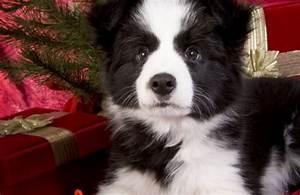Bodenbelag Für Hunde Geeignet : malteser hunde 6 fakten ber die kleine hunderasse ~ Lizthompson.info Haus und Dekorationen